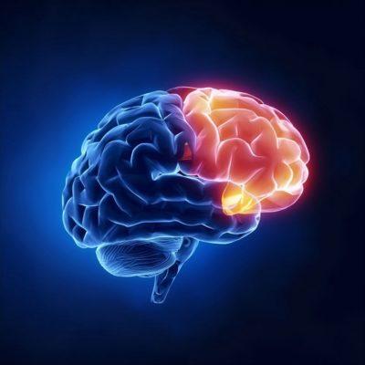 สารเคมีในสมอง