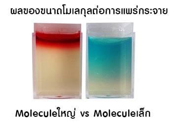 ผลของโมเลกุลต่อการแพร่กระจาย