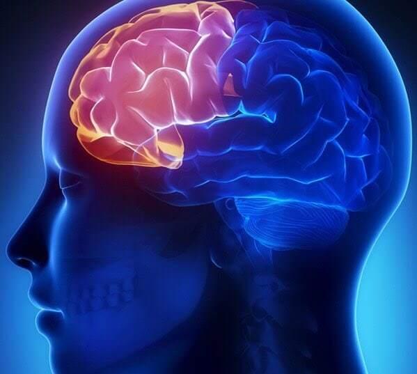 สมองส่วนหน้า Frontal-lobe